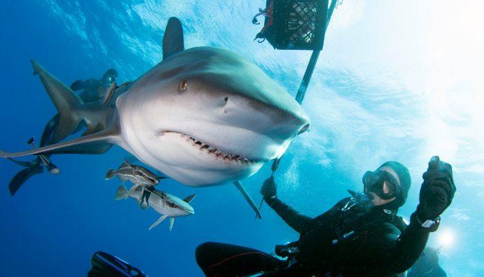 shark88