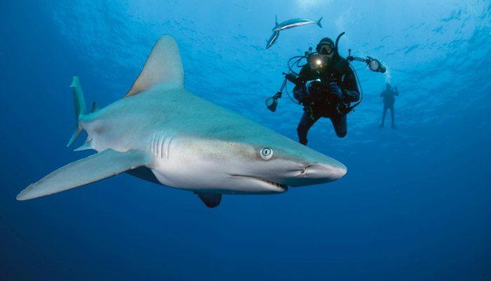 shark99